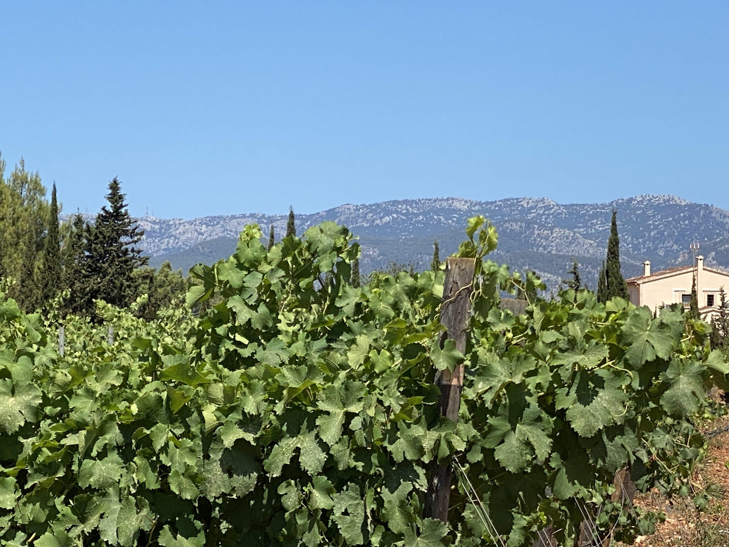 Can Davero Wein und Berge